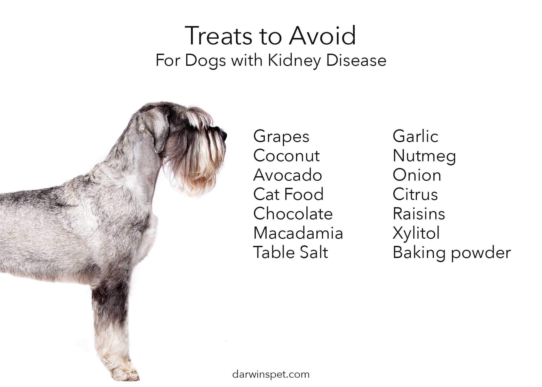 Dog food for kidney disease how to choose and provide the