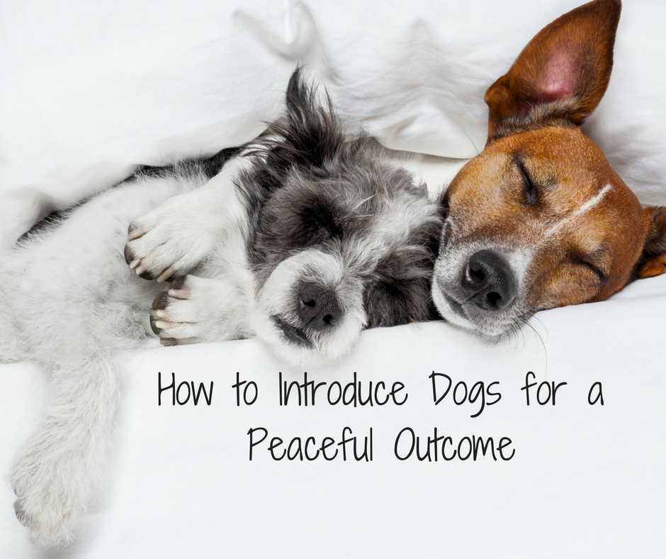 How to Introduce Dogs for a Peaceful Outcome