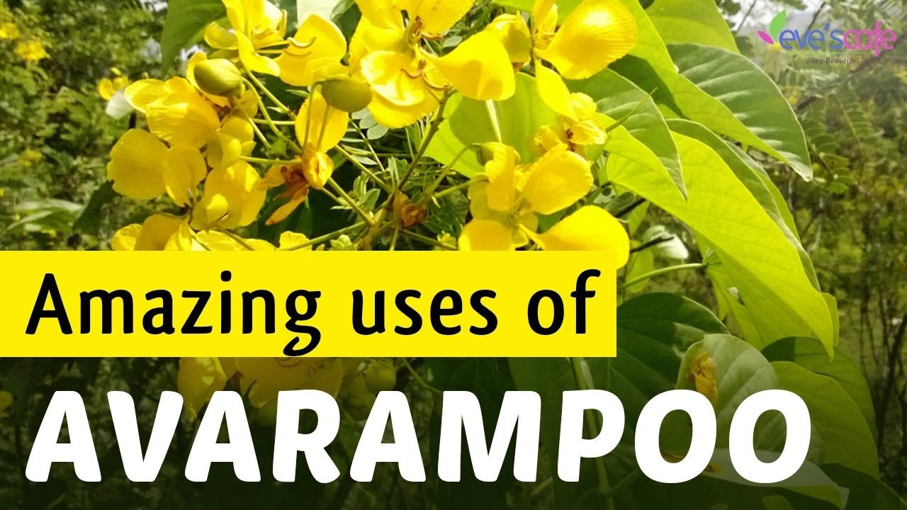 Avarampoo has many uses in #skincare and #haircare  Avarampoo gives