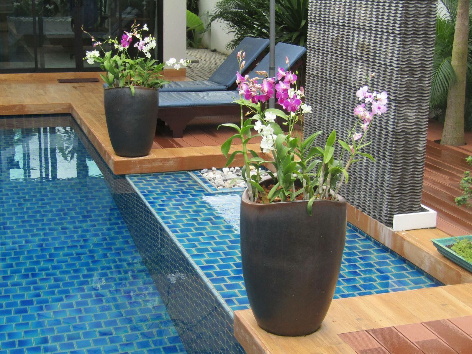 Pots With The Orchids For Swimming Pool Area Garden Design Orchids Garden