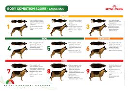 07d0bd236d7de517595d093554242c6c image result for dog body condition chart dogs dogs, pets, your pet