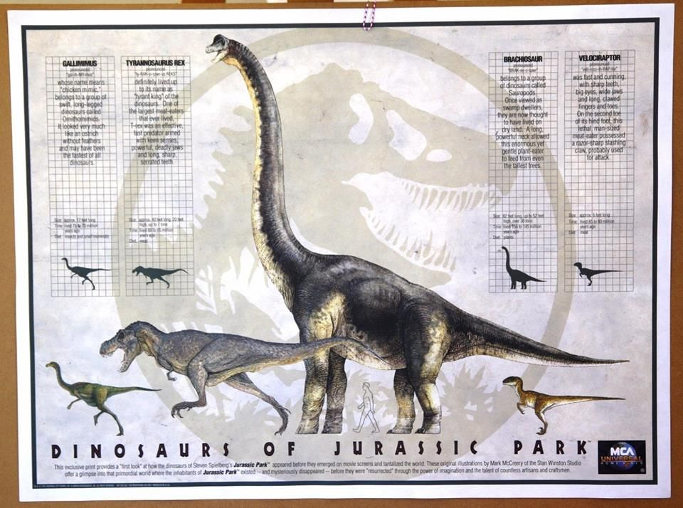Size chart for the jp dinosaurs and alternate color scheme of tyrannosaurus rex jurassic park also rh pinterest