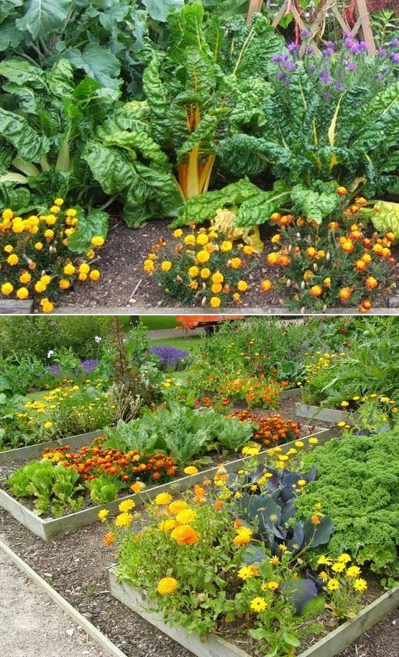 Amazing Ideas To Intercropping Vegetables And Flowers 400 x 300
