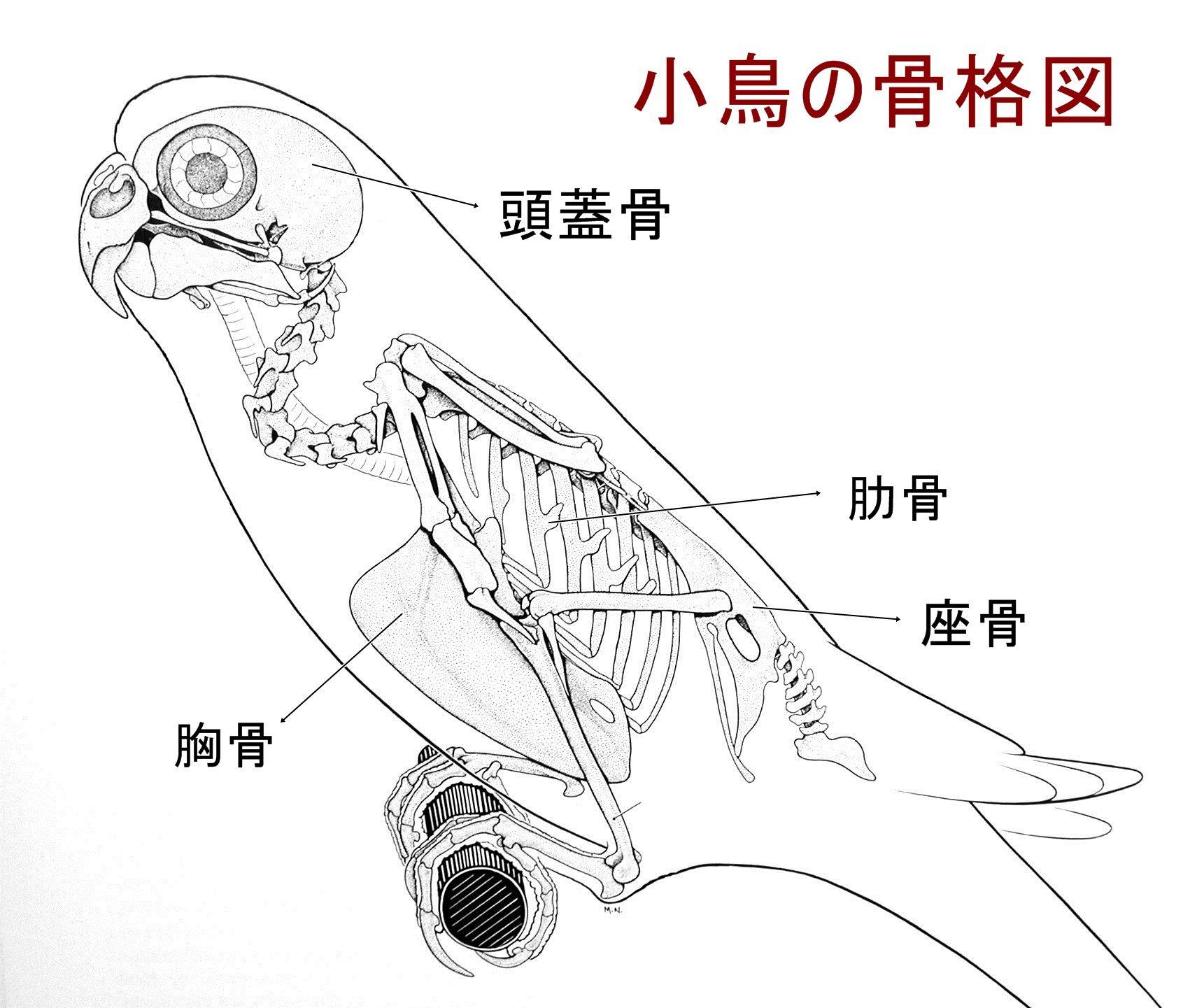 動物 骨格 イラスト