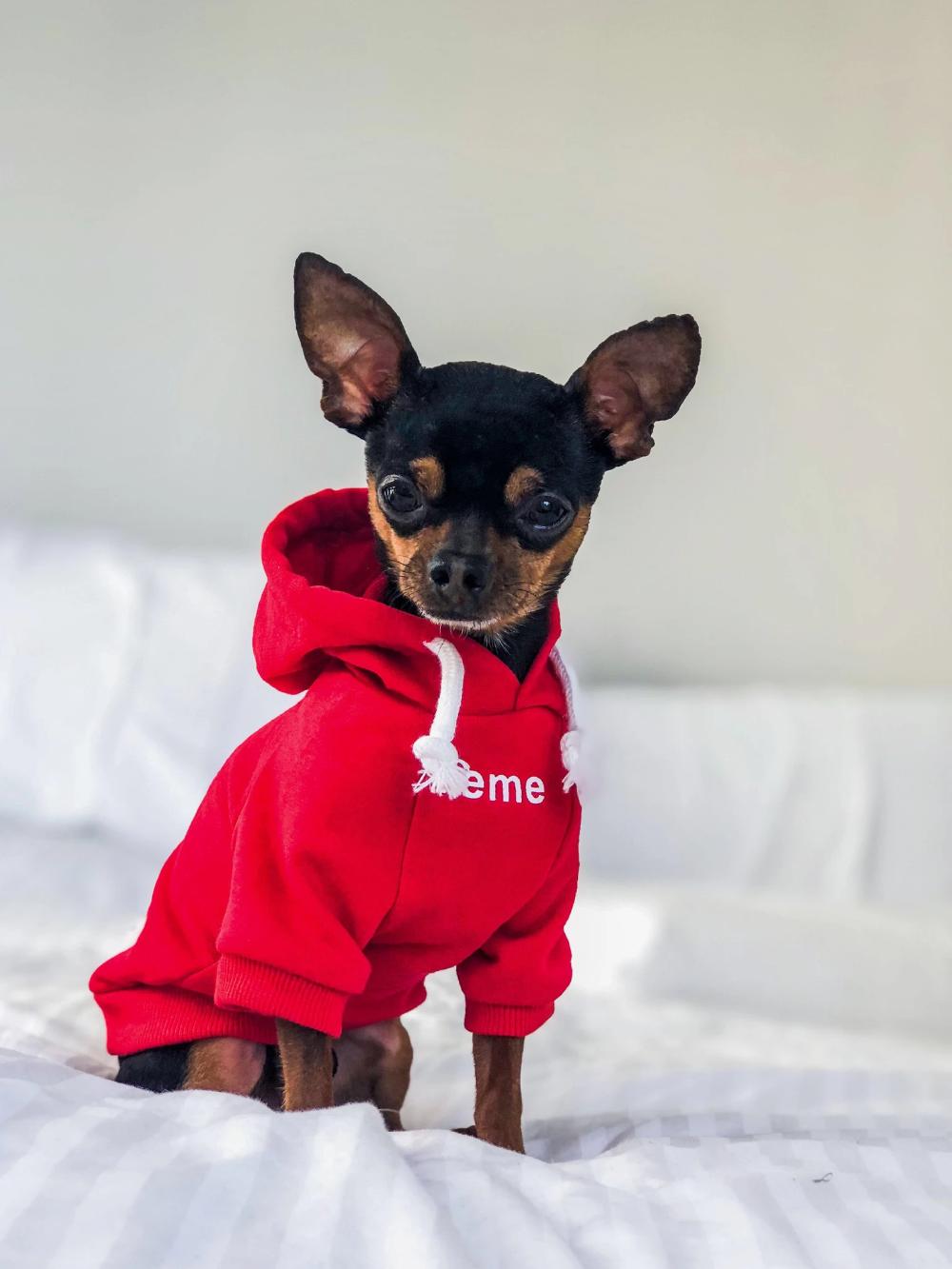 If not Black Labrador Just Dog Pick Your Size Hood Sweatshirt