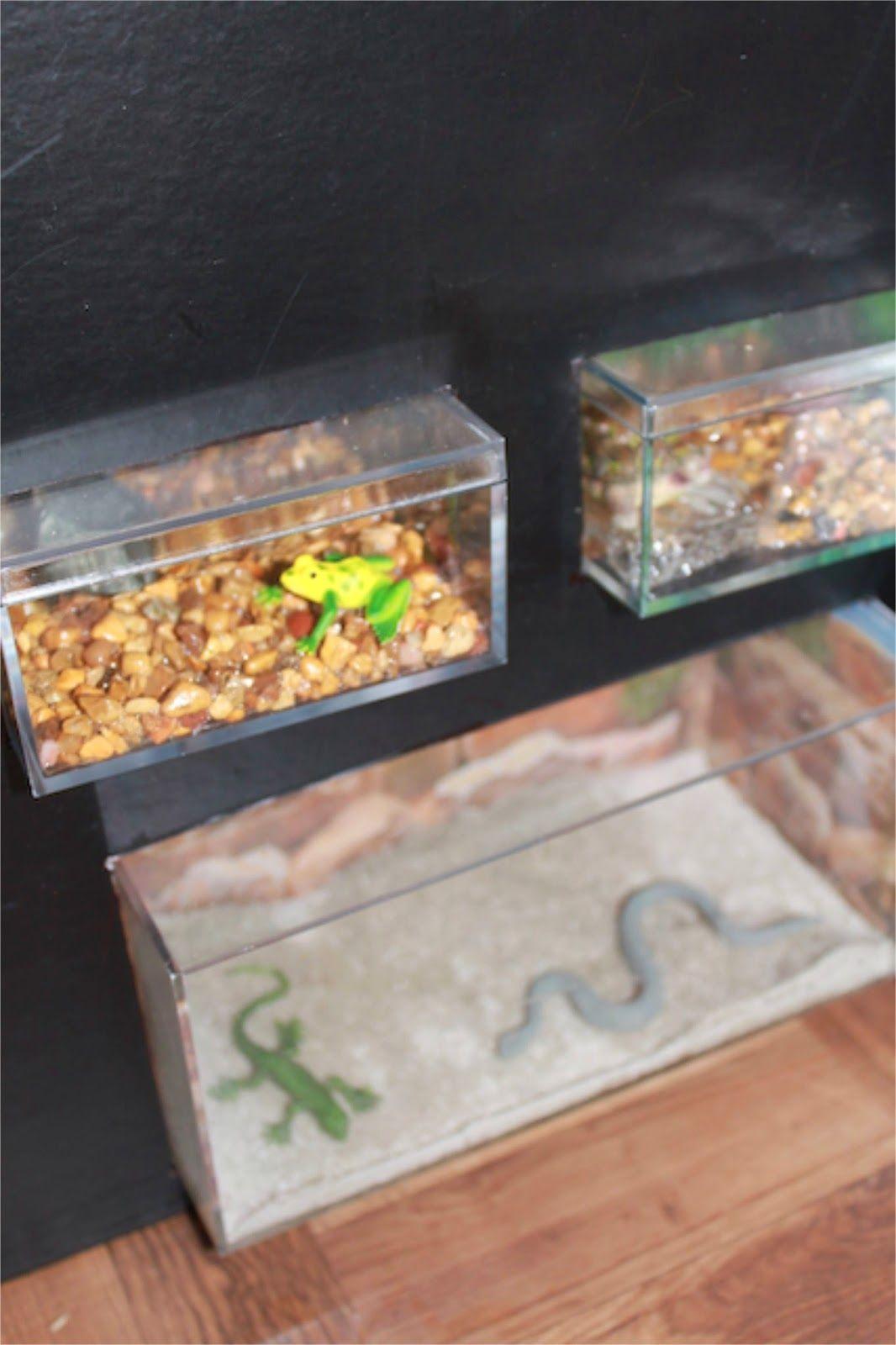 The 25 best online aquarium store ideas on pinterest for Online freshwater fish store