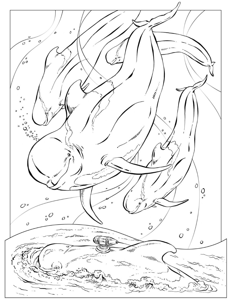 pilot whale coloring thumb - Science Coloring Book
