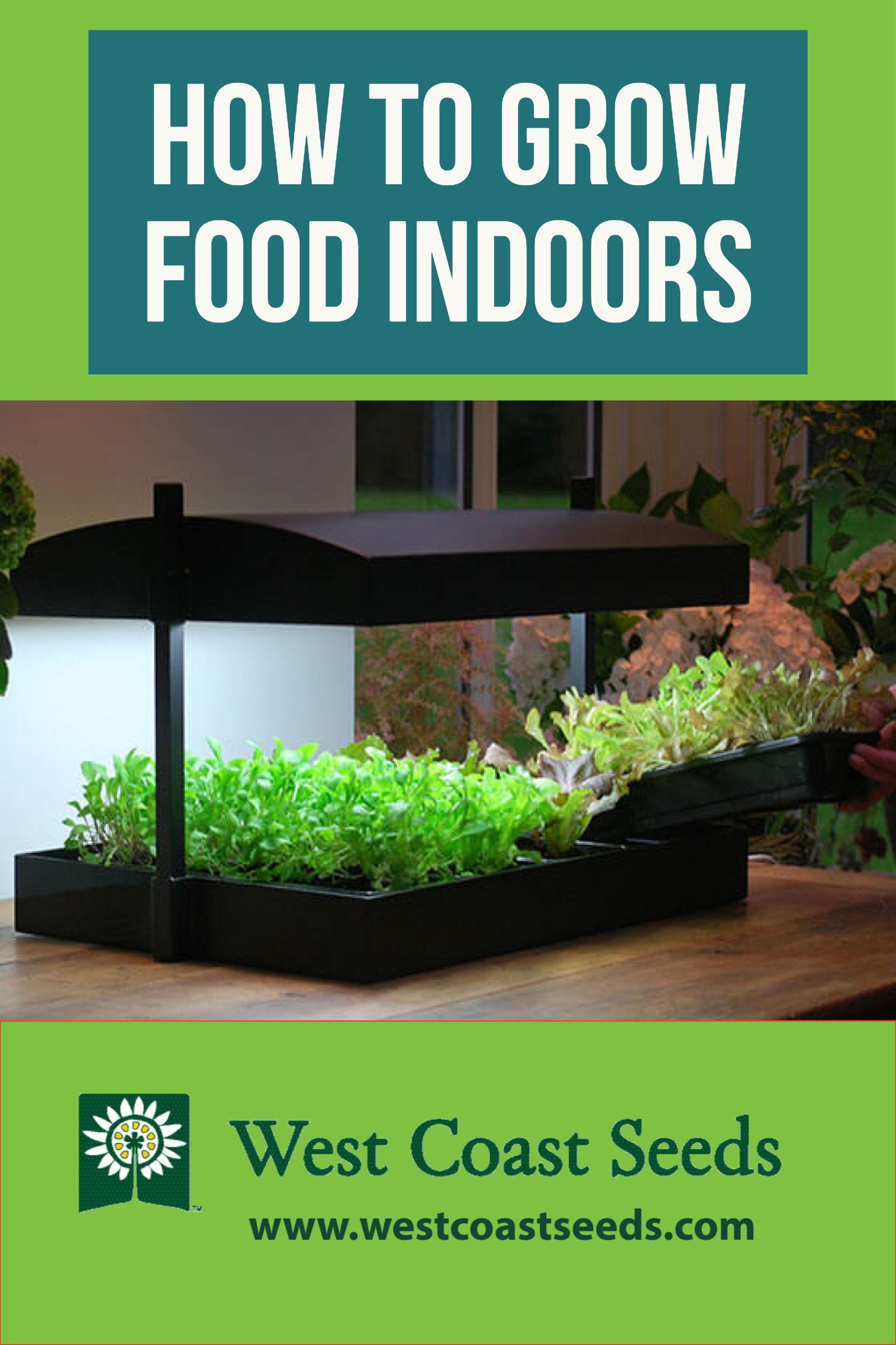 Growing Food Indoors Inside Garden Growing Vegetables 640 x 480