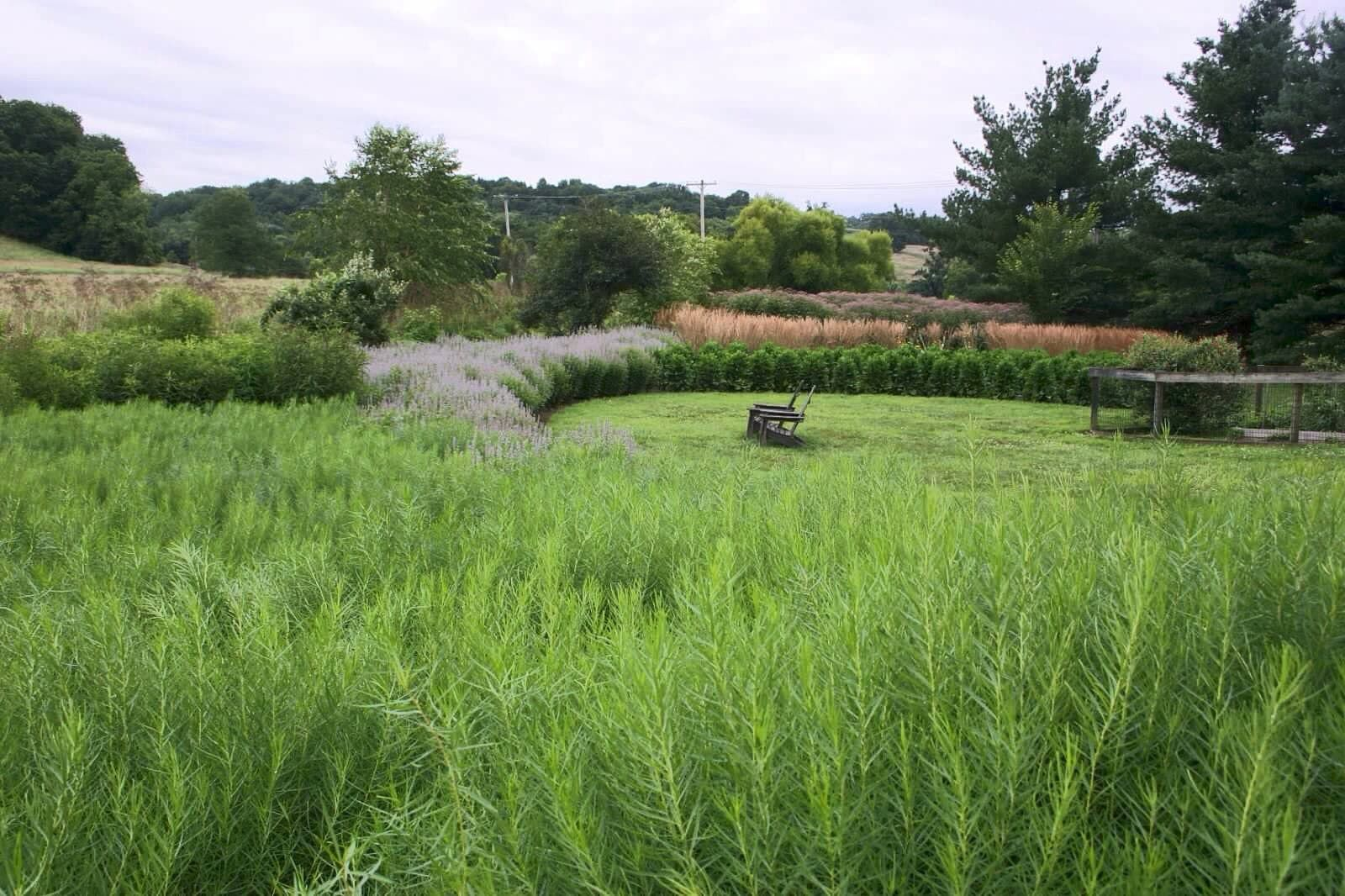 Meadow Design By Donald Pell Gardens In Chester County Meadow Design Landscape Architect Meadow Landscape