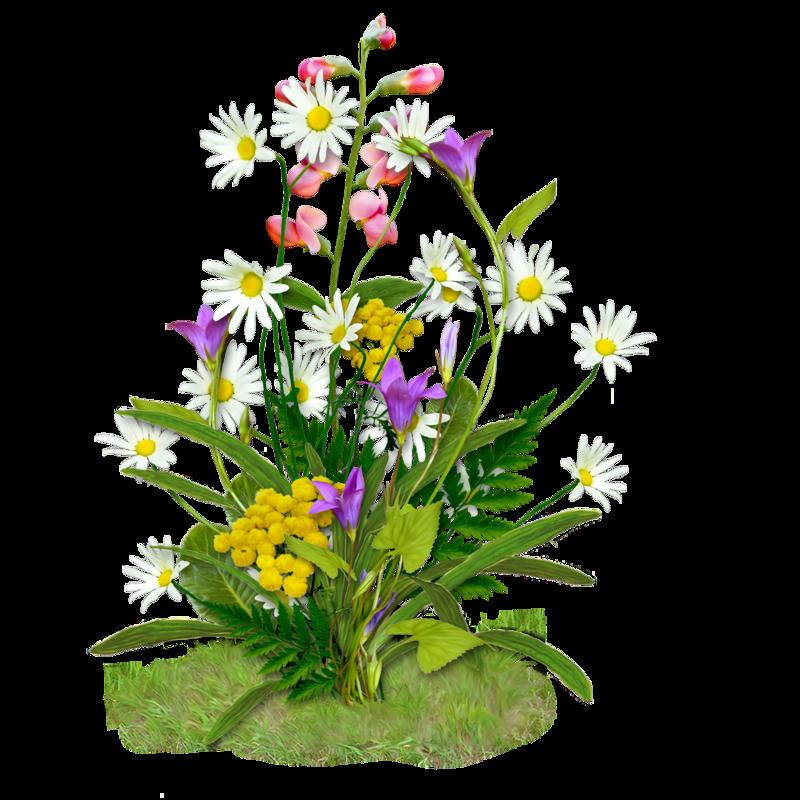 Приобретением машины, картинка полевые цветы для детей на прозрачном фоне
