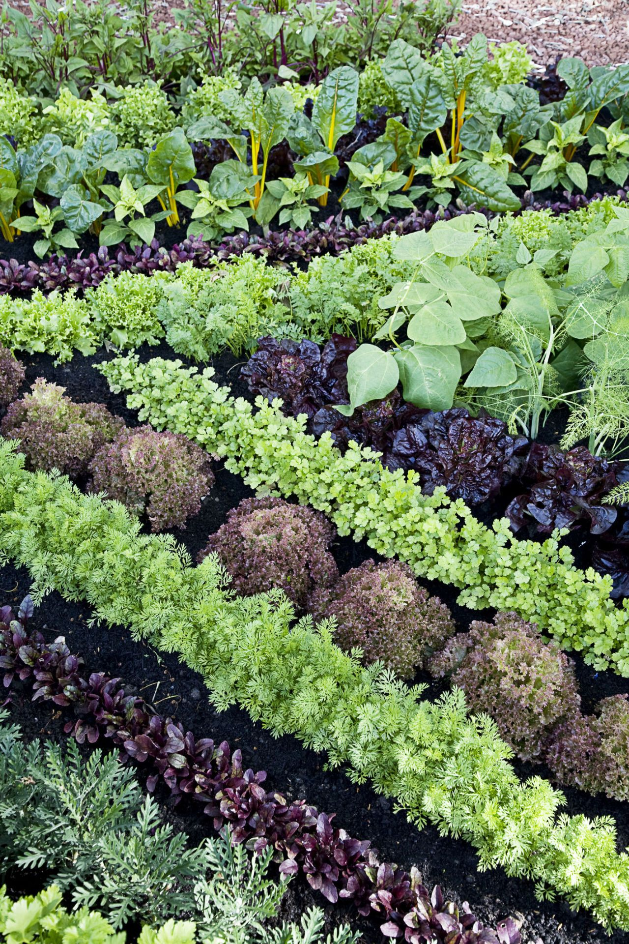 Inspirational How to Plant A Vegetable Garden