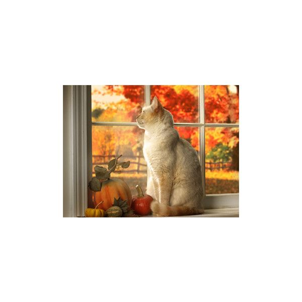 Autumn Cat Wallpapers Free Wallpapers Desktop Themes A Cats Autumn Animals Fall Cats