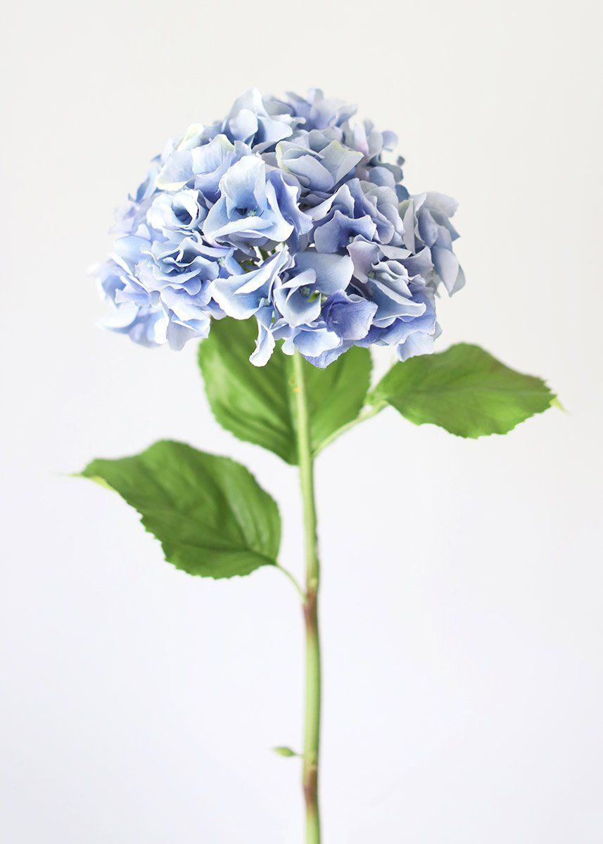 Light Blue Silk Hydrangea Flower In 2020 Hydrangea Flower Artificial Hydrangea Flowers Silk Hydrangeas