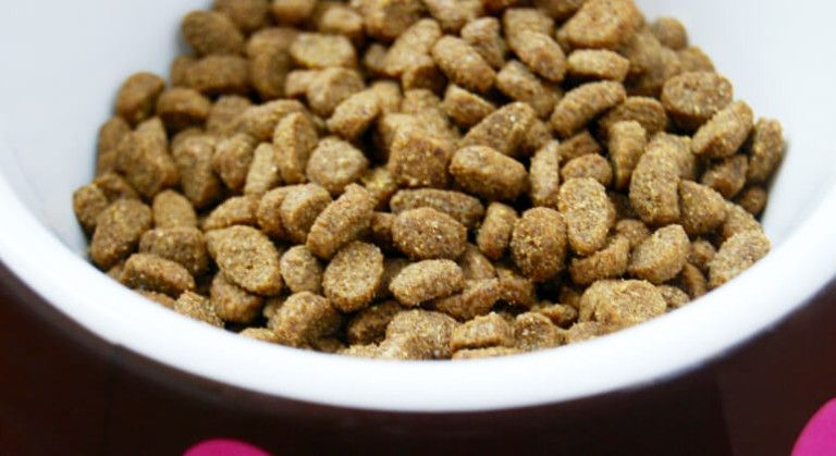 Pet Parents Beware 8 Red Flag Dog Food Ingredients To Avoid