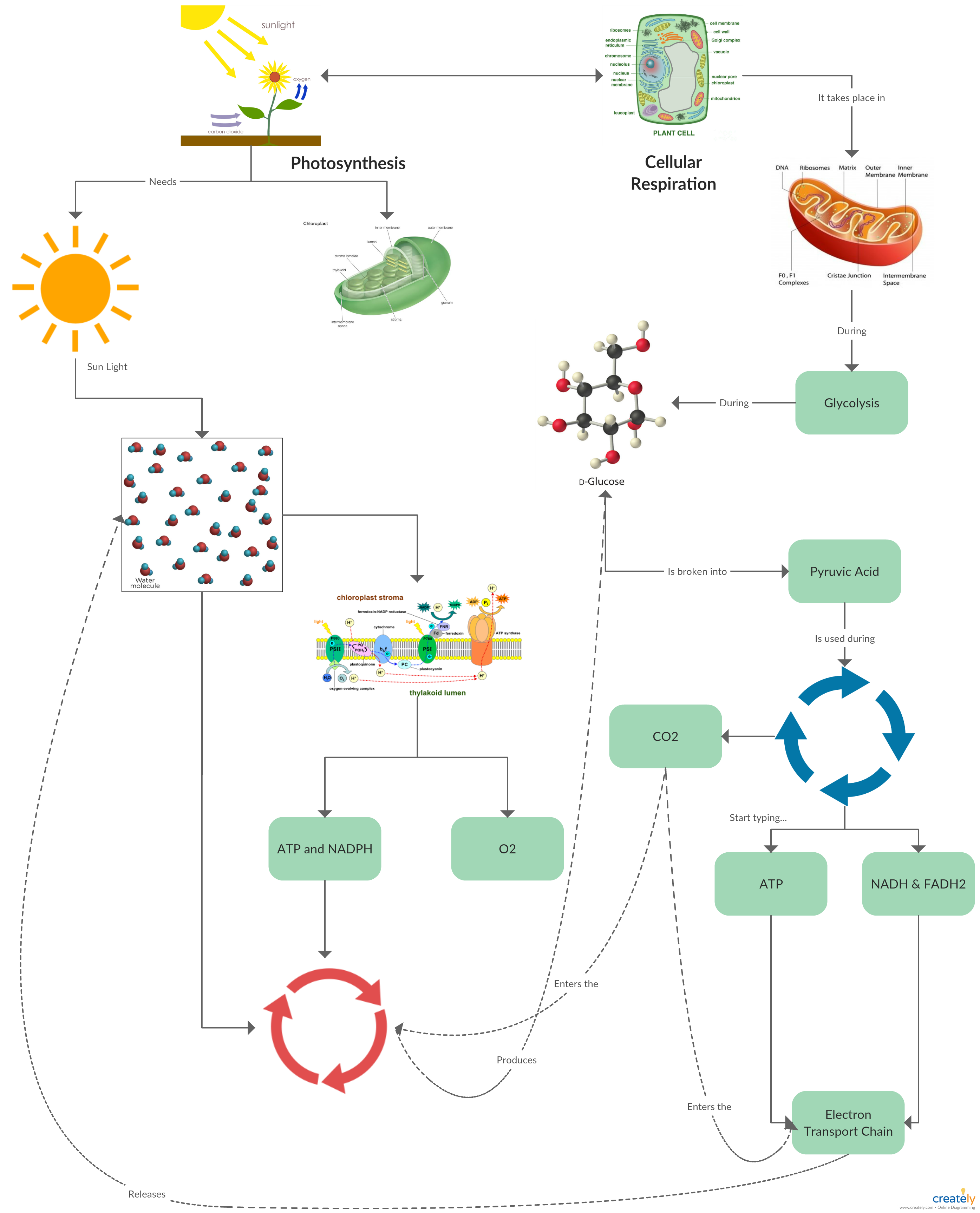 Concept map template illustrating the metabolic path of cellular ...