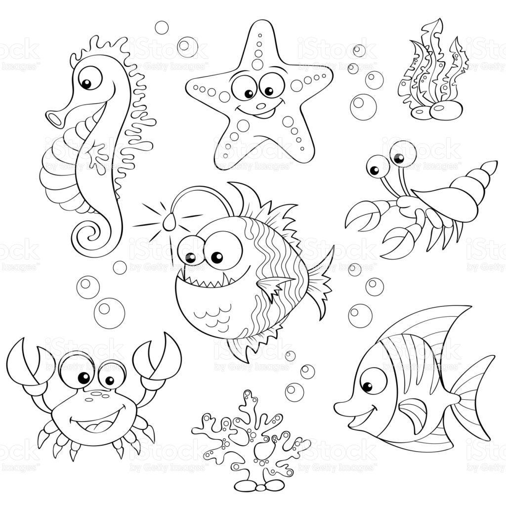 Vector Illustration Tiere Zeichnen Muscheln Zeichnen Malvorlagen Tiere