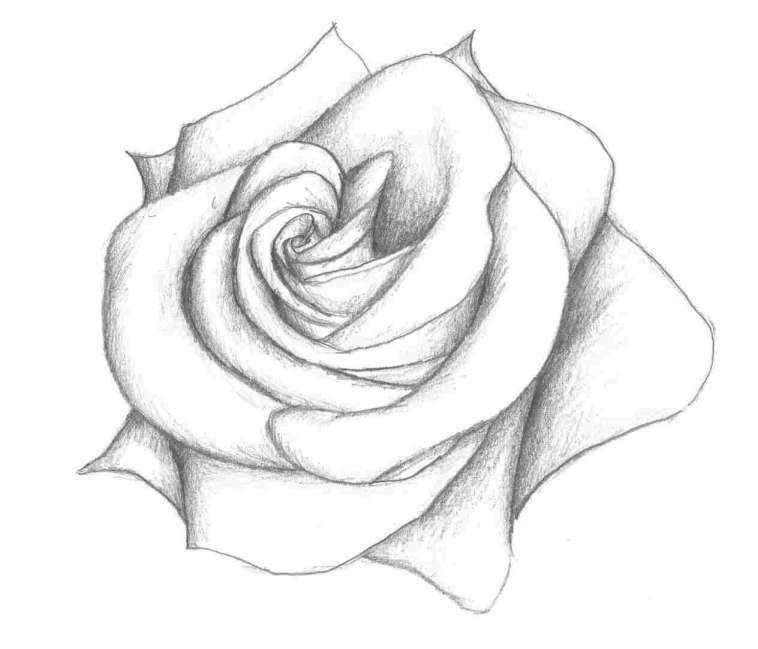 16 3d Flower Drawing Flower Sketch Pencil Flower Sketches Flower Drawing