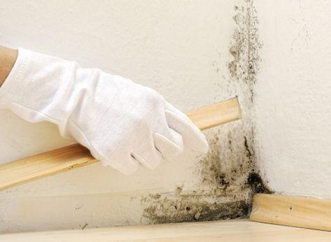 Lorsque de la moisissure apparaît dans la maison, rien ne va plus, c - Que Faire En Cas D Humidite Dans Une Maison