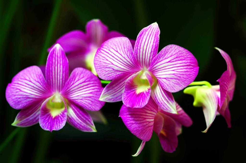 Pin Oleh Anggita Arum Di Motif Bunga Bunga Eksotis Menanam Bunga Anggrek