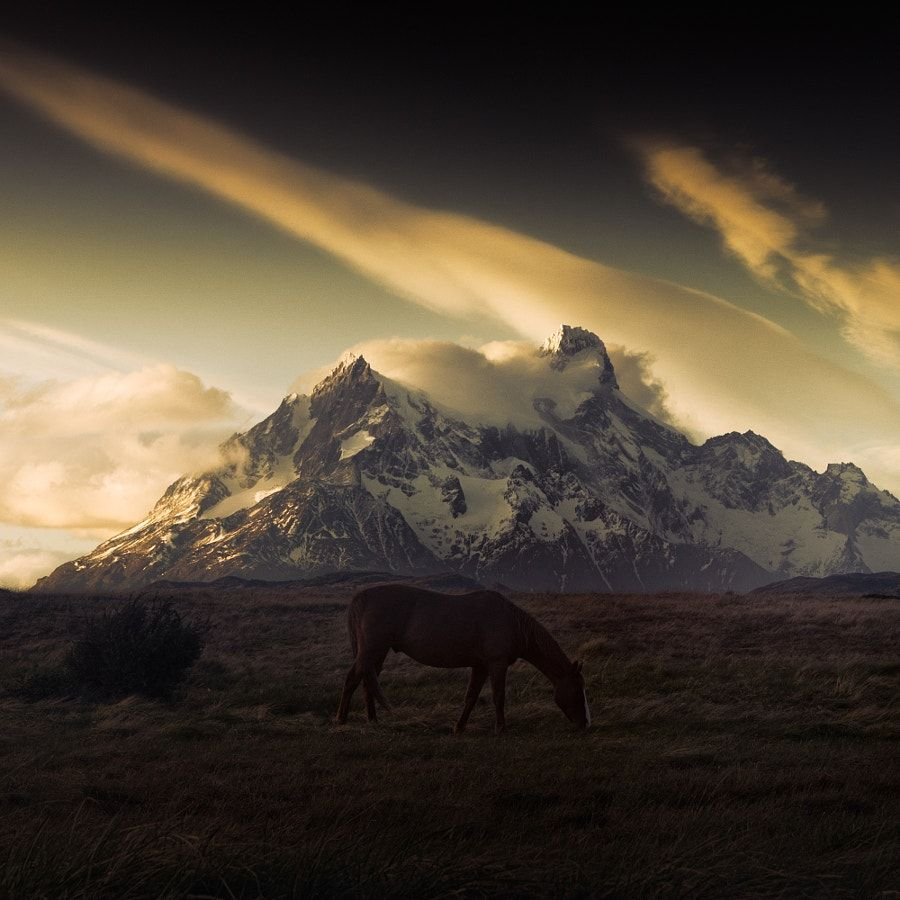 horse by Andy Lee on 500px