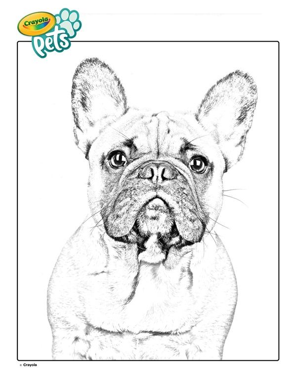 Color This French Bulldog Coloring Page Hang In On The Fridge It S A Dog Coloring Page Of A Real Pet Download Pr In 2020 Dog Coloring Page Coloring Pages Bulldog