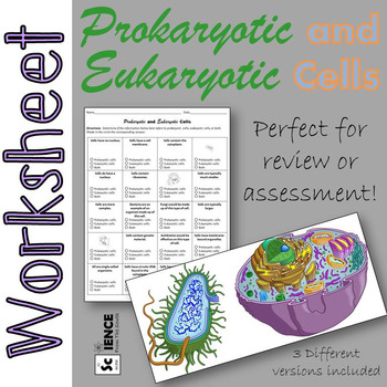 Prokaryotic And Eukaryotic Cells Worksheet For Review Or