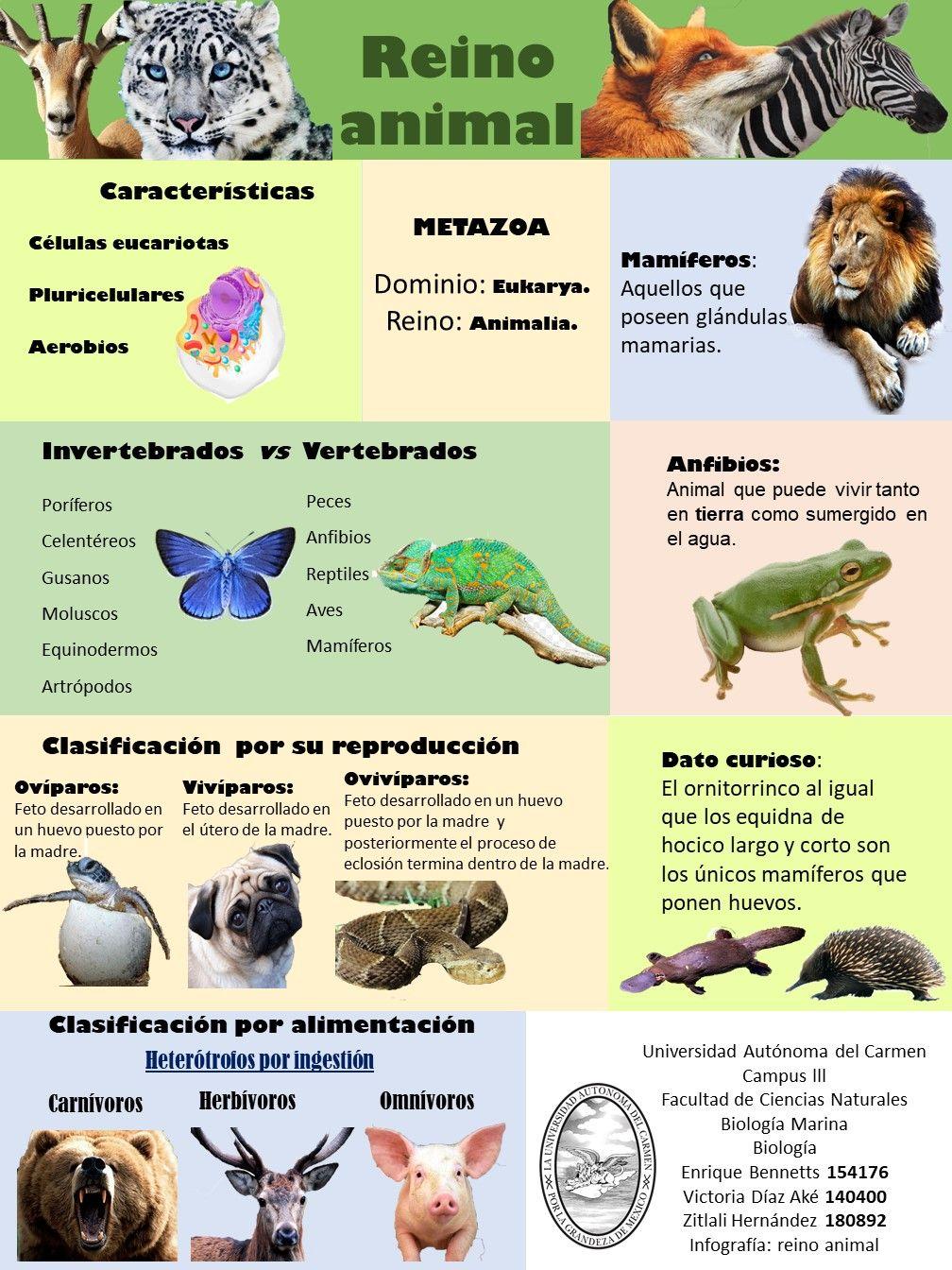 Infografía Del Reino Animal Reino Animal Biologia 2 Biología