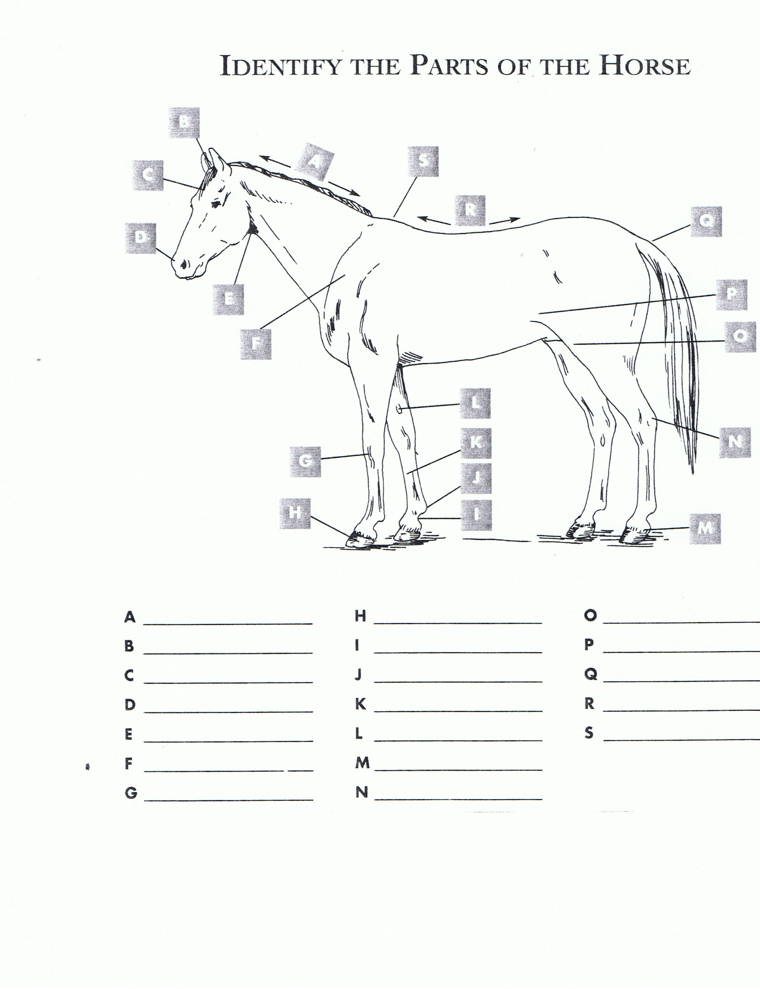 Worksheets Horse Anatomy Worksheet free printable horse worksheets red oak rider program camp program