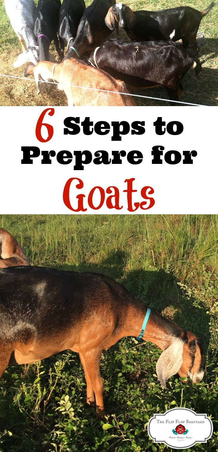 6 Simple Steps to Prepare for Raising Goats (With images ...
