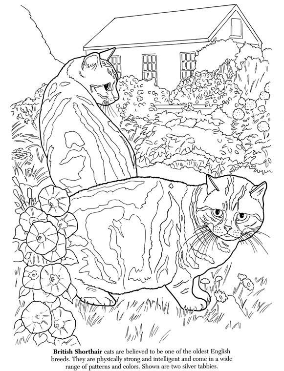 Dover Cats For Coloring