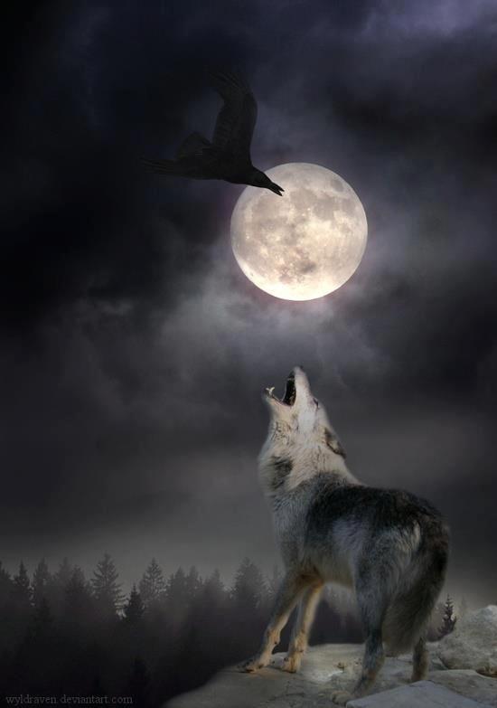Wolf Raven And Full Moon Wolf Photos Wolf Spirit Wolf Love