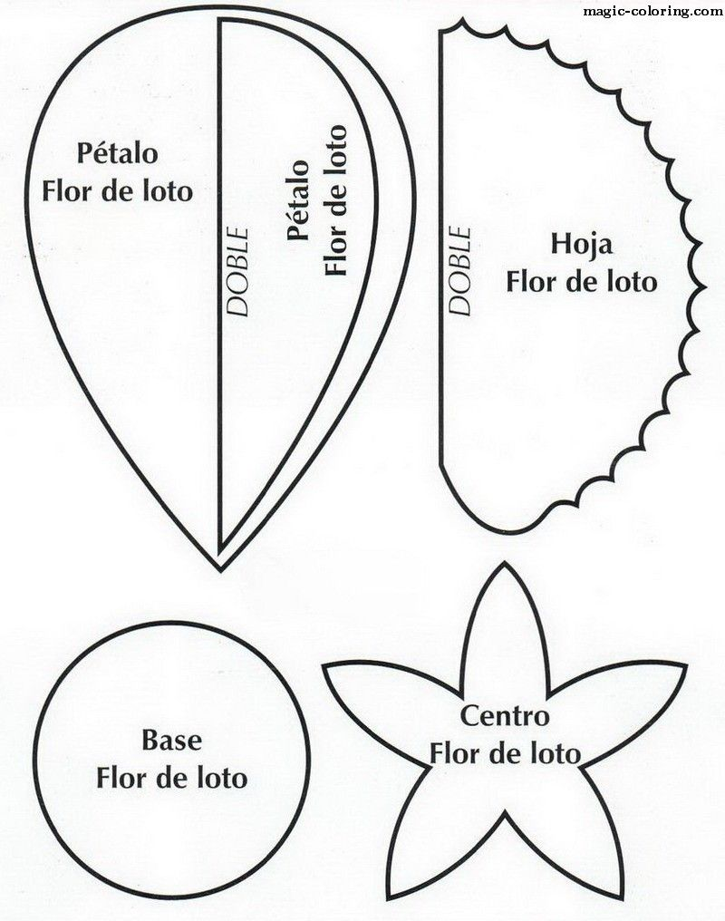 Water Lily Diagram