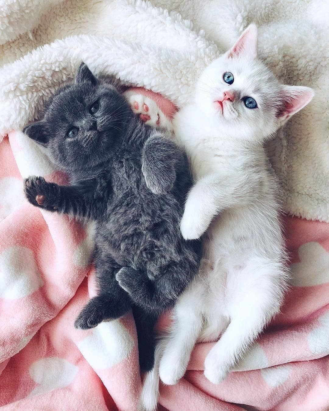 Cat Kitty Cats Cats Make Cat Home Cat Funny Love Cat Quote Cats Cats Cute Cats Pets Kittens Kittens In 2020 Kittens Cutest Cute Cats Beautiful Cats