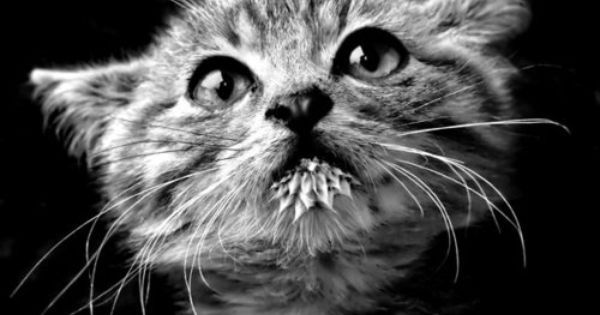 Kitten - fine picture