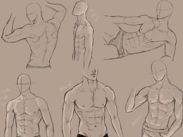 Pin by Cait on Art References | Pinterest | Drawings, Anatomy and Pose