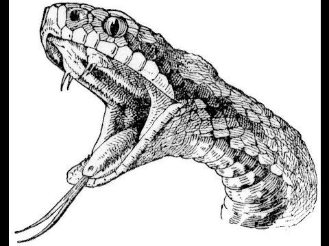 The Serpent, A tough tale