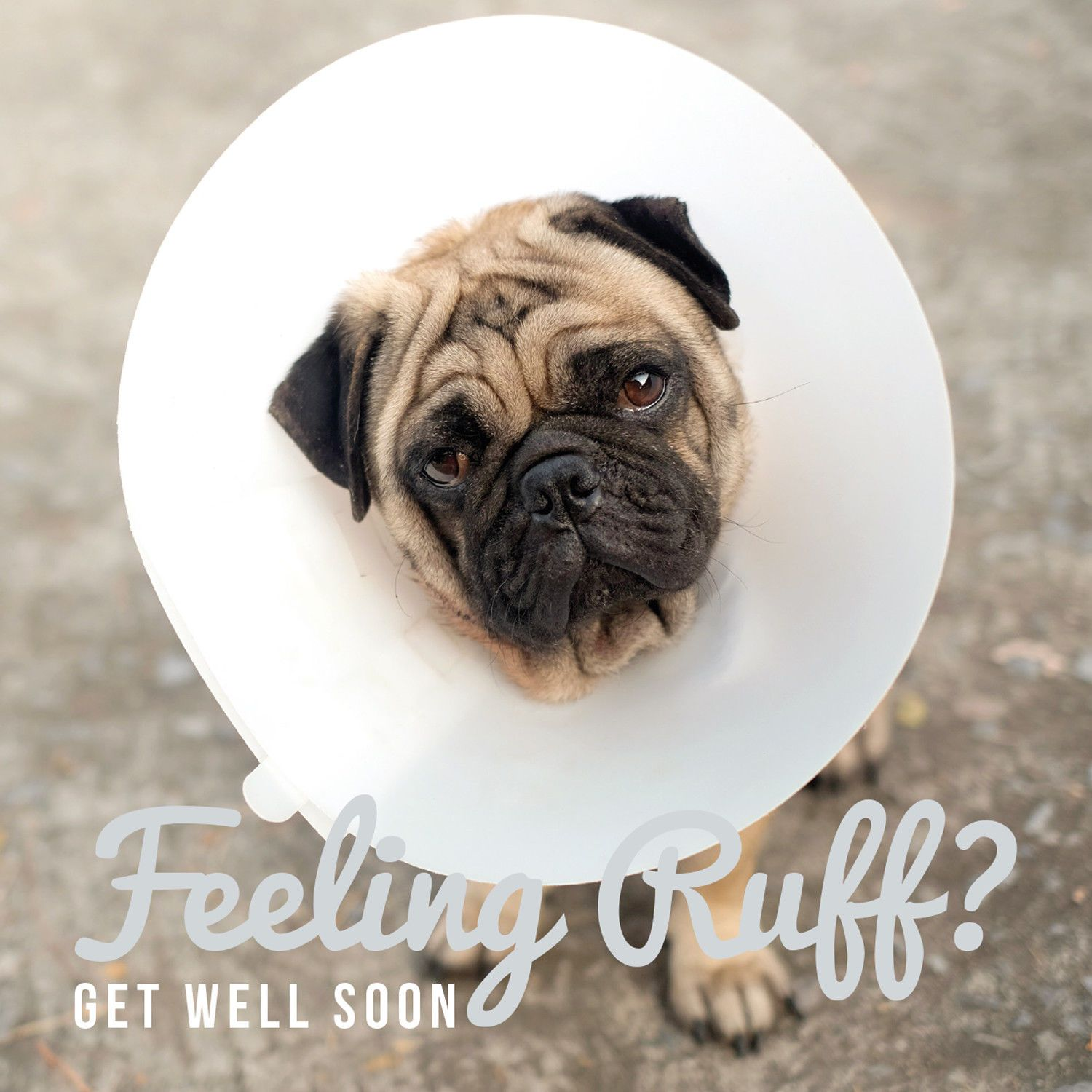 Pug Get Well Card Available At Www Ilovepugs Co Uk Post Worldwide