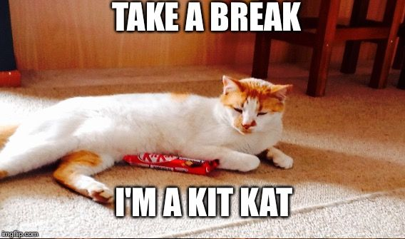 07da1bc6196c34d59b06e3e9d7f8554c kit kat cat take a break i'm a kit kat image tagged in funny