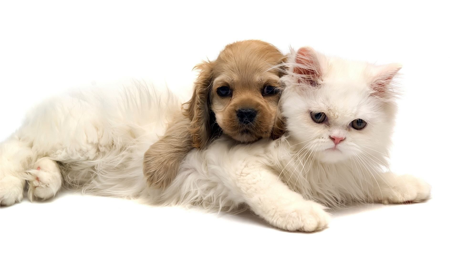 adorable cat and dog wallpaper | wallpapers green cat cute and dog