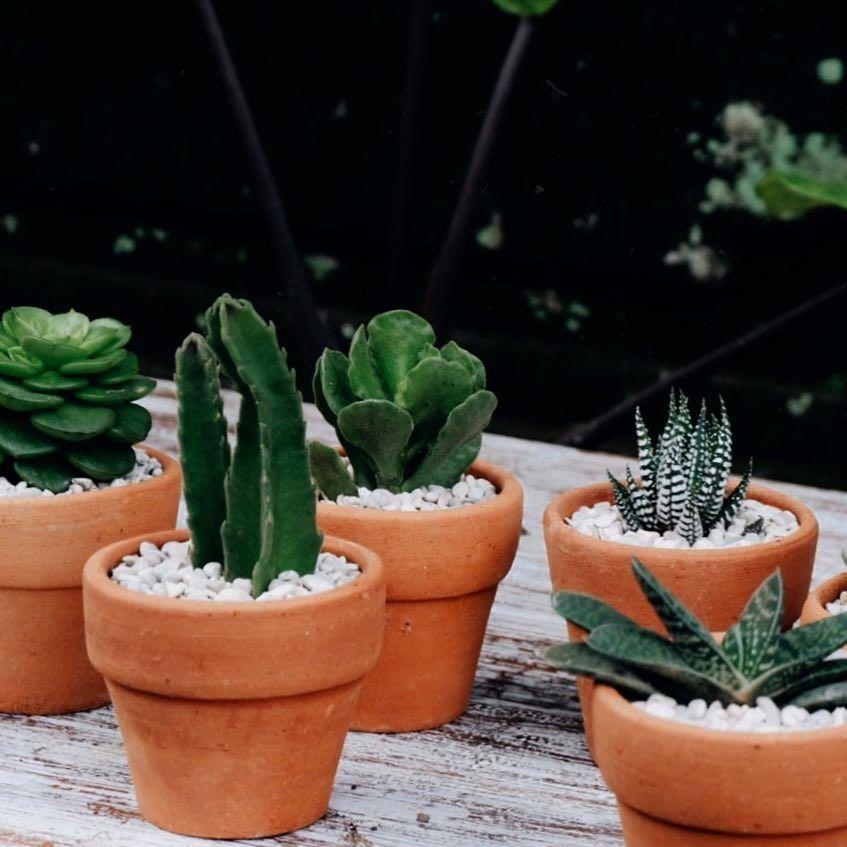 Cacti Succulent Terracotta Pots Plant Family Plant Gang Tiny Pots Small Pots Baby Plants Baby Plants Pot Baby P Mini Plants Terracotta Pots Small Potted Plants