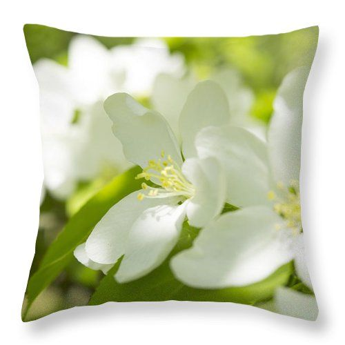 Apple Blossom Throw Pillow featuring the photograph Encyclopedia Of Spring Image Apple Blossom by Irina Effa