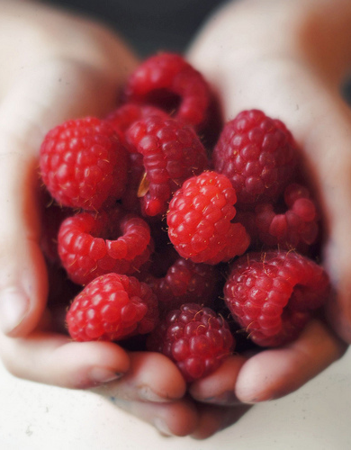 Raspberry Seed Oil is high in natural alpha and gamma tocopherols (Vitamin E), Vitamin A and essential fatty acids. It is an excellent anti-oxidant. #harmoniabotanica #raspberry #raspberryoil