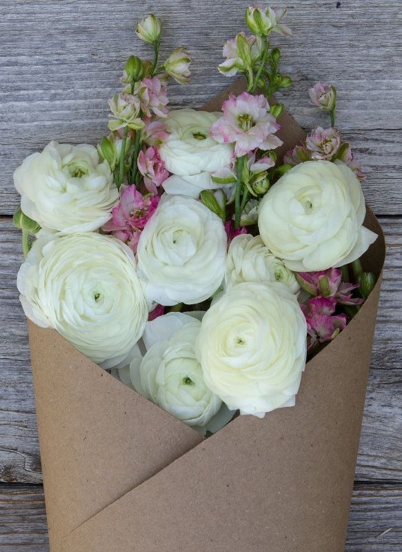 Marshmallow | Pinterest | Marshmallow flowers, Flower arrangements ...