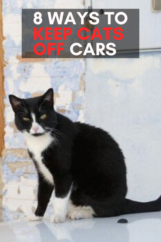 8 Ways to Keep Cats off Cars in 2020 Funny cute cats