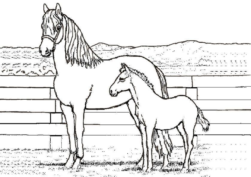 Pferde Ausmalbilder Springen Di 2021