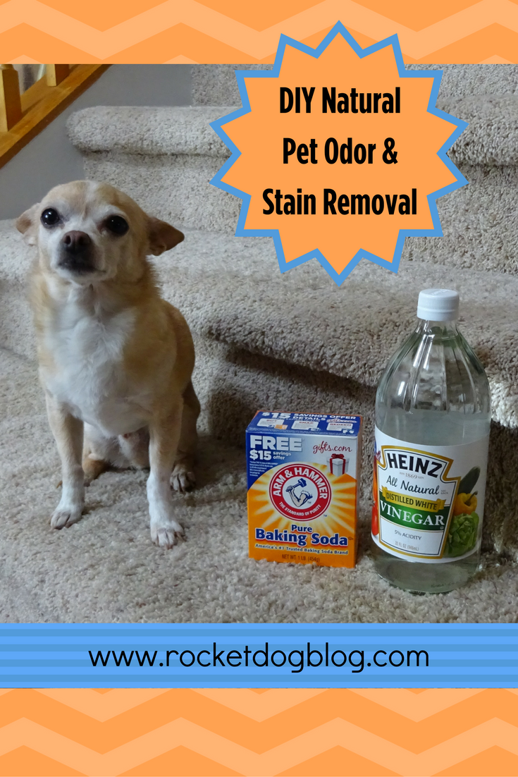 DIY Natural Pet Odor & Stain Removal Because Accidents