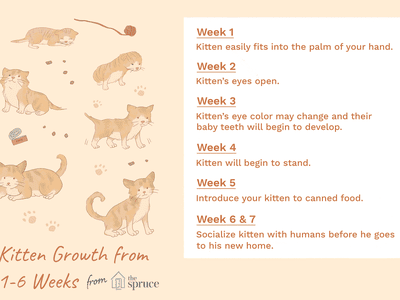 Pin By Cat Lover On Cat Development Stages Newborn Kittens Kitten Care Feeding Kittens