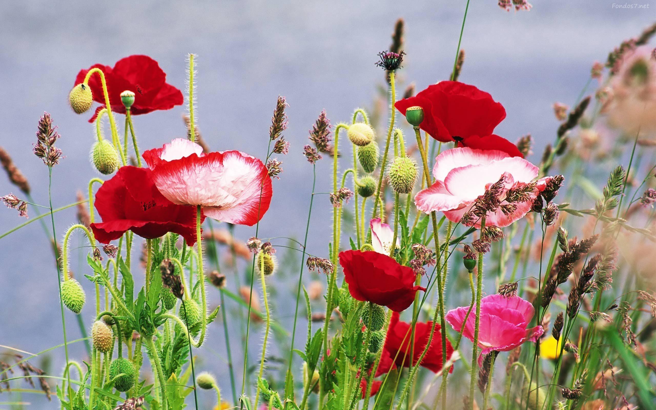Flores Hermosas Para Fondo De Pantalla Wallpapers T