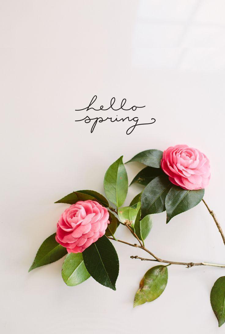 Hello Spring Hello Spring Wallpaper Hello Spring Spring Vibes