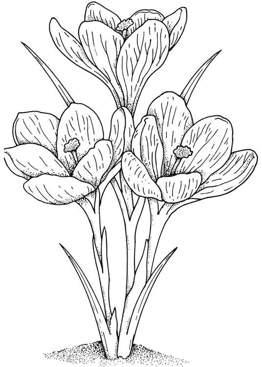 Kleurplaat Bloemen Welcome To Dover Publications Flores Para Dibujar Paginas Para Colorear De Flores Y Dibujos